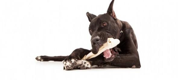dog-chews-604x270